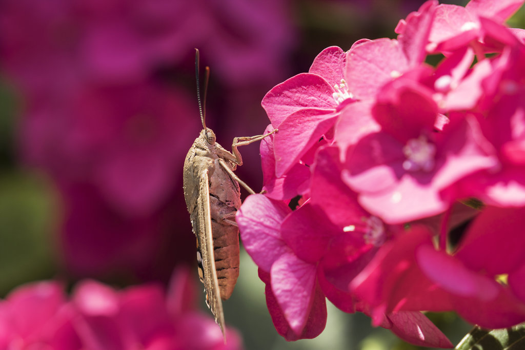 Blütenbewohner